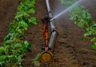 Agricoltura nell'Ue, quanto è sostenibile l'uso dell'<b>acqua</b>? Studio in corso della Corte dei Conti