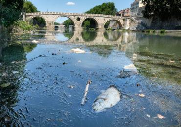 """""""Disseteremo Roma con l'<b>acqua</b> del Tevere"""": la promessa di Acea agli azionisti"""
